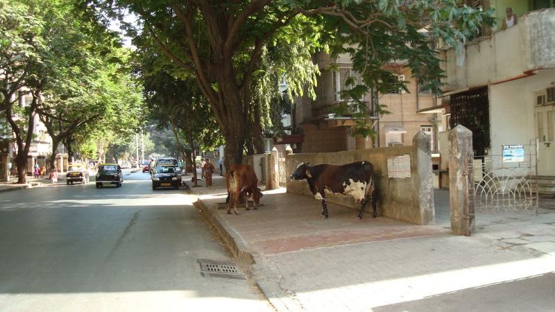 streets_of_mahuva